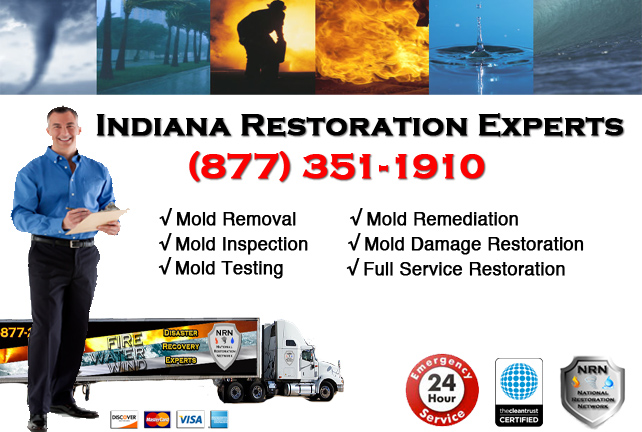 Indiana Mold Removal Services